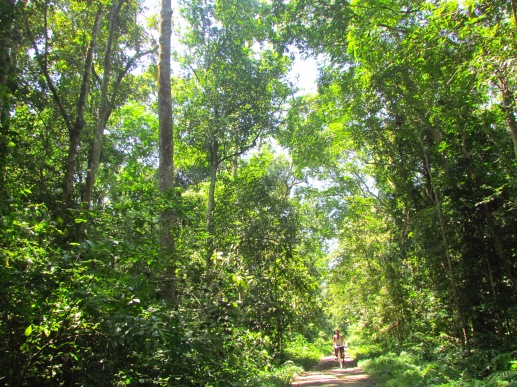 1. Villagers cycle to and fro through the Hoollongapar Gibbon Sanctuary
